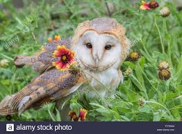 European Barn Owl, A Rescue Bird, Rehabilitated And Trained For ... Barn Rabbit Rescue Driving The Rusty 200 Abdoned 56 Chevy Cheap Truck Challenge Central Whidbey Island Fire Responds To At The Smith Injured Barn Owl Rescued Wildlife Friends Foundation Thailand Old Barns Long May They Live Shelter And Stand In Green Open Unboxing Paw Patrol Roll Rockys And Play Fun The Rescue Barn Adopted Dogs Rvr Horse Takes Worst Cases To Heal Renew Tbocom Paw Patrol Rocky8217s Track Set Walmartcom European Owl A Bird Rehabilitated Trained For Assortment Of 6 Small Dogs From Rescue Group Sit On Lavendar