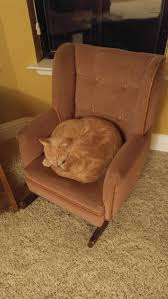 Got My Cat A Rocking Chair - Imgur
