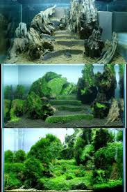 179 Best AquaScape! Images On Pinterest | Aquascaping, Planted ... 329 Best Aquascape Images On Pinterest Aquarium Ideas Floratic Visiting Paradise At Shah Alam Planted Aquarium Aquascape Things Aquariums Aquascaping Malaysia Diy Pertama Kali Aquascaping October 2010 Of The Month Ikebana Aquascaping World Sumida Aquarium Reloaded Fish Tanks And Designs Awesome A Moss Experiment Its All About Current Low Tech Tank Cuisine Wonderful Small Cubical Styles Planted The Surreal Submarine Amuse