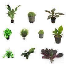 lot de plantes pour terrarium très humide 10 plantes zone