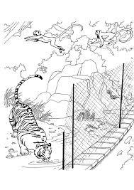 Coloriage Zoo Tigre Sur Hugolescargotcom