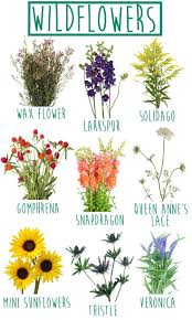 Best 25+ Wild Flower Gardens Ideas On Pinterest | Wild Flower ... Free Images Blossom Lawn Flower Bloom Backyard Botany Go Native Or Wild News Creating A Wildflower Meadow From Part 1 Youtube Wildflower Garden Update Life In Pearls And Sports Bras Budapest Domestic Integrity Field Of Wildflowers She Shed Decorating Ideas How To Decorate Your Backyard Pics Best 25 Meadow Garden Ideas On Pinterest Rockoakdeer Neighborhood For National Week About Texas A Whole Wildflowers For Tears The Duster Today Fields Flowers Design With Apartment Balcony