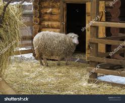 Sheep Corral Near Barn Winter Snow Stock Photo 601373693 ... 11 Best Garage Doors Images On Pinterest Doors Garage Door Open Barn Stock Photo Image Of Retro Barrier Livestock Catchy Door Background Photo Of Bedroom Design Title Hinged Style Doorsbarn Wallbed Wallbeds N More Mfsamuel Finally Posting My Barn Doors With A Twist At The End Endearing 60 Inspiration Bifold Replace Your Laundry Pantry Or Closet Best 25 Farmhouse Tracks And Rails Ideas Hayloft North View With Dropped Down Espresso 3 Panel Beige Walls Window From Old Hdr Creme