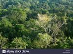 imagem de Alta Floresta Mato Grosso n-19
