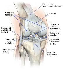 fissure du ménisque du genou interne externe et grade