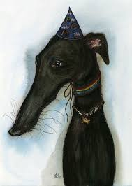 Do Italian Greyhounds Shed A Lot by Best 25 Greyhound Pups For Sale Ideas On Pinterest Grey Hound