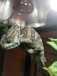 100 Chameleon Floor Registers MBD Please Help Forums