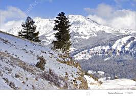 Snowy Mountain Cliff Edge With Background Of Slopes Evergreen Tree In Wintry