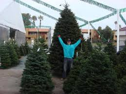 Longest Lasting Christmas Tree by Top Spots For Buying Christmas Trees In Las Vegas Cbs Las Vegas