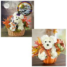Halloween And Fall Flowers For Dog Lovers + 1800Flowers ... 1800 Flowers Coupons Boston Flower Delivery Promo Codes For 1800flowers Florists Thanks Expectationvsreality How Do I Redeem My 1800flowerscom Discount Veterans Autozone Printable Coupon June 2019 Sears Code Online Crocs Promo January Carters Canada Airsoft Gi Coupons Promotional Flowerscom 10 Off Amazon White Flower Farm Joanns 50 Ares Casino Flowerama Uber Denver Jetblue December 2018 Kohls 20 Available September
