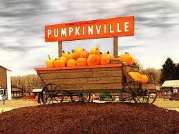 Apple Pumpkin Picking Syracuse Ny by 145 Best Buffalove 716 Images On Pinterest Buffalo Girls