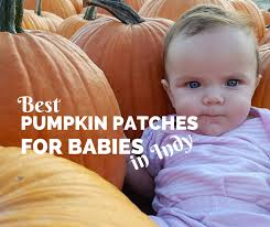Pumpkin Patch Glendale Co by 2017 Indianapolis Area Best Pumpkin Patches And Farms Discount