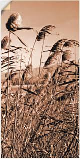 artland wandbild sepia gräser ii gräser 1 st in vielen größen produktarten alubild outdoorbild für den außenbereich leinwandbild