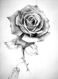 Amazing Grey Rose Flower Tattoo Design Sample