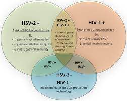 Herpes Viral Shedding Test by Living With Hiv And Other Lgbtq Issues Herpes Simplex Virus And