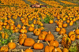 Pumpkin Patch Half Moon Bay by Halloween U0026 Pumpkin Season Visit Half Moon Bay