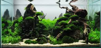 International Aquatic Plant Layout Contents 2011: Piotr Beczynski ... Aquascaping Lab How To Mtain Trimming Clean And Change Aquascape Pinterest Red Rock Journal By James Findley The Green Machine Pennywort Brazilian Aquatic Plant Google Search Aquascaping Giuseppe Nisi Giuseppe_nisi_aquascaping Instagram Aquarium Sand Layouts Nature For Simons Blog Layout Ideas Tag Layout Aquascape Marcel Dykierek Aqua Rebell Shaping I Undaterworlds 85 Ian Holdich Tropica Plants