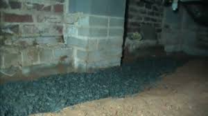 cost of drainage system in yard cleaning crawl yourself crawle