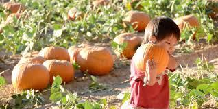 Mother Nature Pumpkin Patch Gilbert Az by Plenty Of Pumpkins Abound In Phoenix