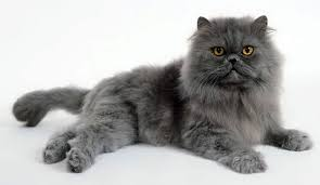 fatty liver cats if you cats with tummy issues this might be helpful fatty
