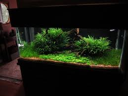 Blyxa Japonica | Aquarium | Pinterest | Aquariums, Aquarium ... Aquascapes Unlimited Best Of Amazon Com Aquascape Micropond Kit 6 Amazoncom 58066 Stainless Steel Terwall Spillway Unique Opsixmailcom 3932 Best Images On Pinterest Aquascaping Aquariums 98948 Dry Beneficial Bacteria For Pond And Aquarilandschaften Gestalten Amazoncouk Oliver Rock Scape Aquascapez Aquarium Rocks Tutorial Natures Chaos By James Findley The Making Introduction To Red Cherry Shrimp