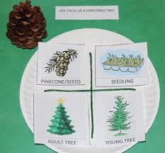 Life Cycle Of A Christmas Tree 001