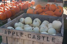 Fargo Moorhead Pumpkin Patches by 5 Pumpkin Patches And Corn Mazes To Explore In Nd