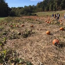 Maryland Pumpkin Patches Near Baltimore by Larriland Farm Temp Closed 130 Photos U0026 107 Reviews Fruits