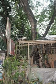 Due To The Harsh Restrictions On Damaging Trees In This City Puerto Princesa Is First Carbon Neutral And Actually Negative South