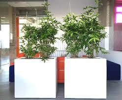 plantes pour bureau l achat et location de plantes louer des plantes de bureau