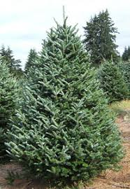Most Christmas Tree Farms In South Carolina Offer A Great Selection Of Fresh Cut Fraser Fir