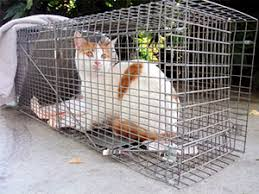 live cat trap how to get rid of cats problems and solutions