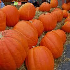 Organic Pumpkin Seeds Bulk by Blue Pumpkin Seeds Promotion Shop For Promotional Blue Pumpkin