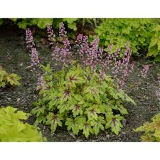 Peppermint Plant - Herb Plants - Edible Garden - The Home Depot Craigslist Classifieds Los Angeles New Car Models 1920 Logbee Colltratedecide Your Favorites On Backpage Electric Heaters Walmartcom Hemet Ca Tires American Bathtub Refinishers