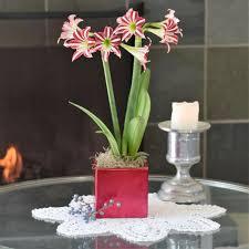 easy to grow bulbs buy flower bulbs