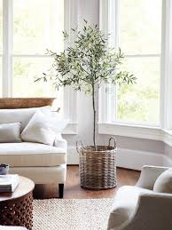 home decorating ideas living room indoor olive tree with