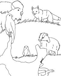 Grasslands Animals Drawings Coloring Pages Kids