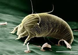 tiere spinnen wanzen und flöhe diese tierchen leben in