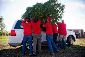 Christmas Tree Seedlings Wholesale by Business Is Booming At California U0027s Only Certified Organic