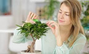 wie pflanzen im haus nach feng shui am besten platziert