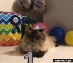 Funny Video Cat Happy Birthday Gif