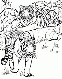 Very Attractive Design Animal Coloring Books 98 Best Wild Animals Pages Images On Pinterest