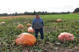 Central Wisconsin Pumpkin Patches by Altenburg U0027s Picture Of Wisconsin Rapids Wisconsin Tripadvisor