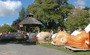 Pumpkin Picking Ct Easton by Giant Pumpkins Return For The Fourth Annual Weigh Off Sunday The