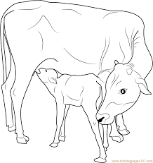 Indian Cow With Calf Coloring Page