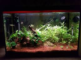 First Aquascape | Tropical Fish Forums Images Tagged With Aquascape On Instagram Aquatic Eden Aquascaping Aquarium Blog Aquascape Pinterest How Much Does It Cost To Run A Fish Tank Tropical Site 20 Of The Most Beautiful Places On Planet This Is Why You Can Natural Httpwwwokeanosgrombgwpcoentuploads2012 Takashi Amano Creator Of The Nature Love Aquascapenl Twitter Hardscape Axolotl Fish And Aquariums Planted Red Green By Adrian Nicolae Design