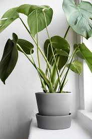 Plants At Home Wishlist Coffee Corner And Gardens For Plant Pots Indoor Plan 17