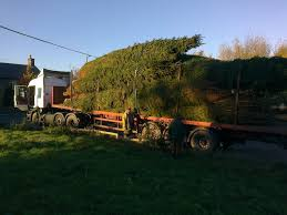 Which Christmas Tree Smells The Best Uk by 5th November Here Comes Christmas Earnshaws Fencing Centres