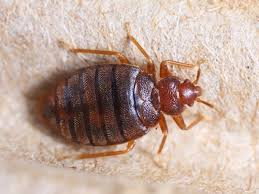 Bed Bugs Action Pest Exterminating Midland