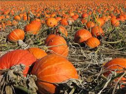 Lehner Pumpkin Farm by Diane Lorenzo Keller Williams Where Are The Best Pumpkin Patches